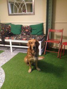 Szeretet faltól-falig: kutyák és személyiségfejlesztés